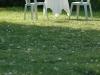 snpf_20_jahr_feier_20-05-2011_b_23_